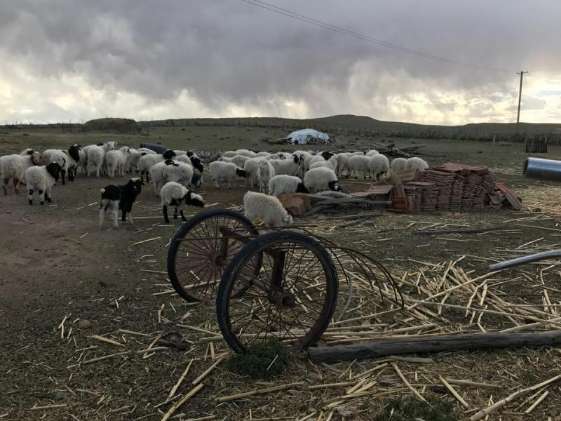 På landsbygden i Inre Mongolia